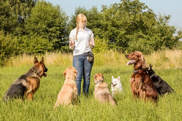 addestratrice con cani