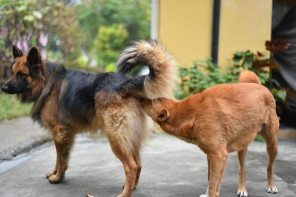 Eliminare le cattive abitudini del cane: come fare