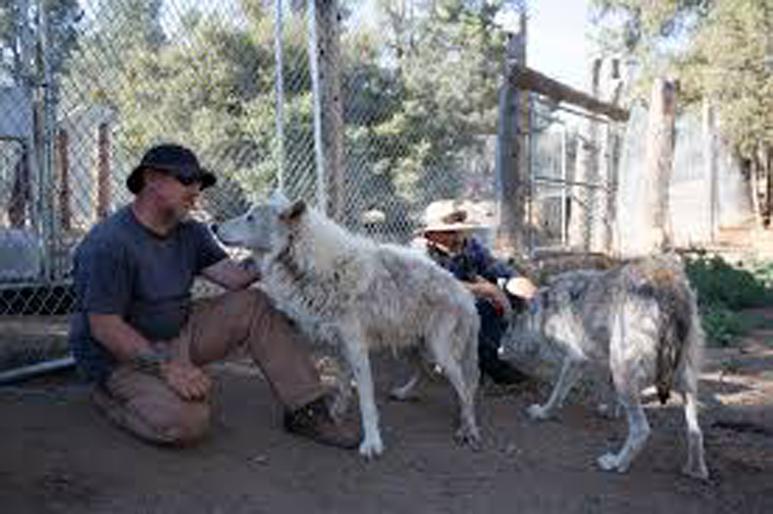 I cani del Doggie Warriors Rescue Sanctuary