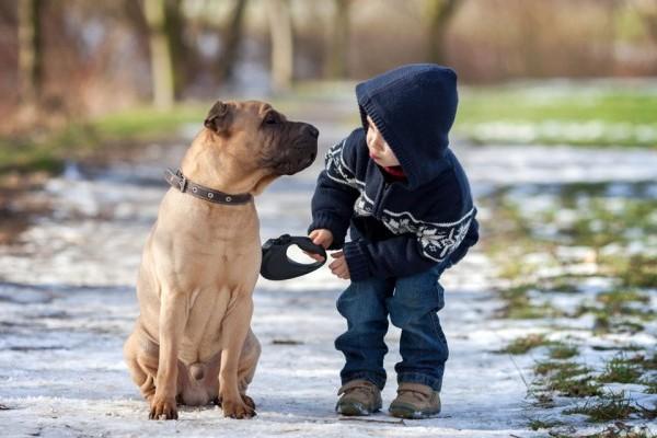I cani possono essere euforici?