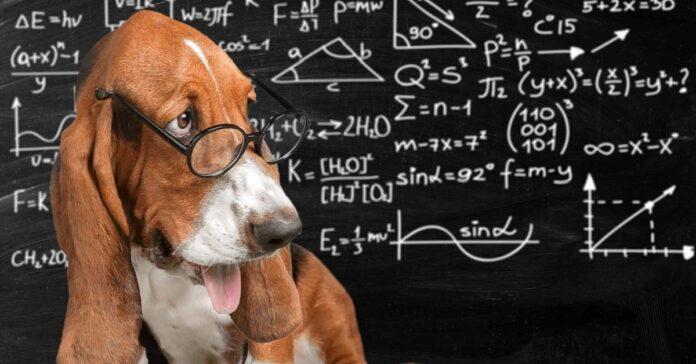 cane matematico