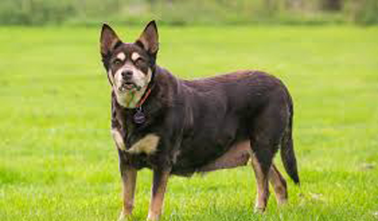 Il cane Hattie