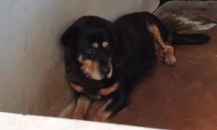Il cane Tyson in canile