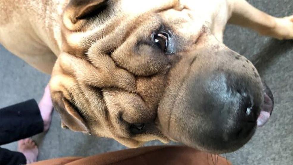 Mata, il cane che ha ritrovato la sua famiglia dopo due anni