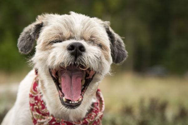 Il cane può mangiare la paprika, o rischia qualcosa?