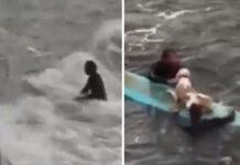 Il cane salvato dai surfisti