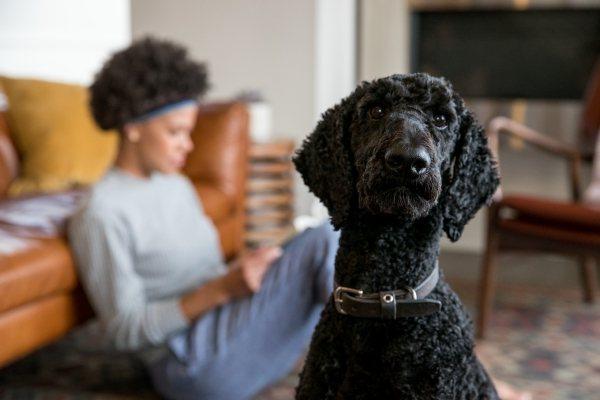 Il cane ti mangerebbe, se ne avesse l'opportunità?