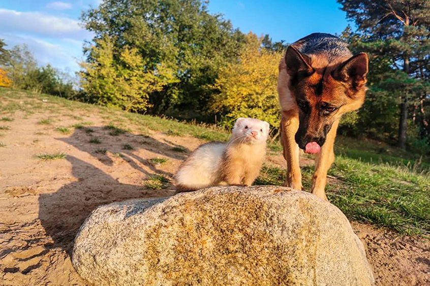 La storia del cane Nova e del furetto