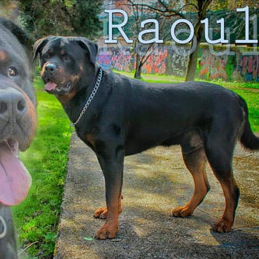 La vicenda del cane Raoul