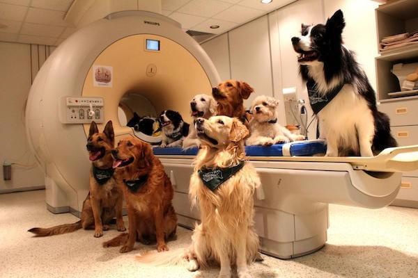 Migliorare l'intelligenza del cane: i modi (e i giochi) più utili