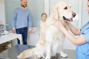 Miraclin per cani: cos'è, a cosa serve e tutto ciò che bisogna sapere