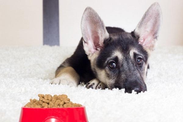Prototecosi del cane: causa, sintomi, prevenzione e cura