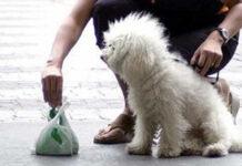 Raccogliere bisogni cane