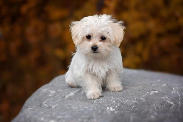 cani carini con pelo lungo