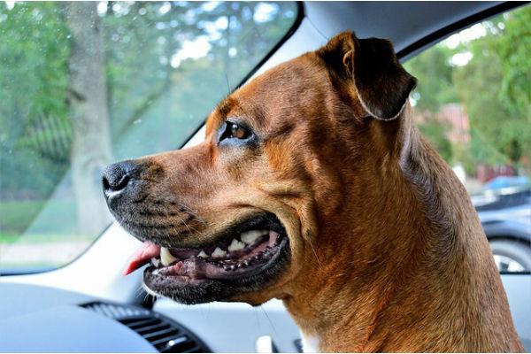 Ronaxan per cani: cos'è, come funziona e quando si usa