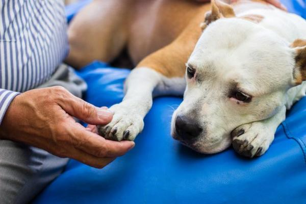 Scarsa motilità intestinale nel cane