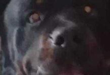 Storia del cane Raoul
