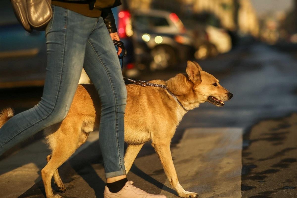 Sviluppare una buona relazione con il cane: trucchi e cosa sapere