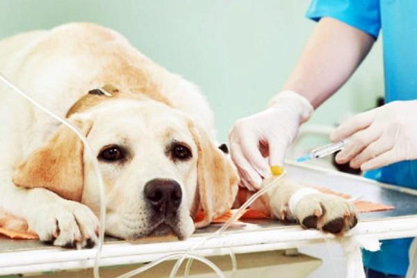 Miglior tagliaunghie per cani - Amici di Cuccia