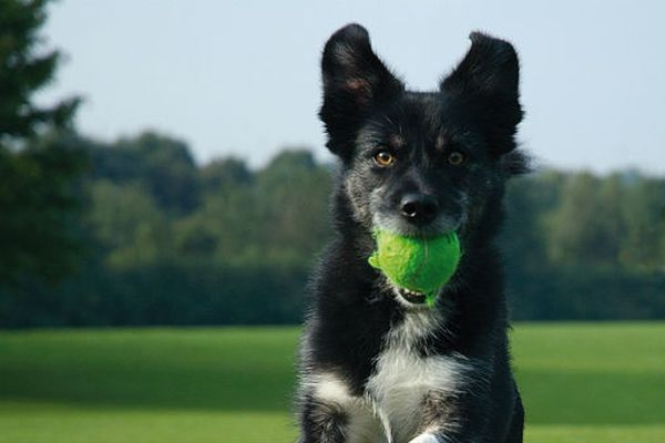Tecniche di rinforzo nell'addestramento del cane
