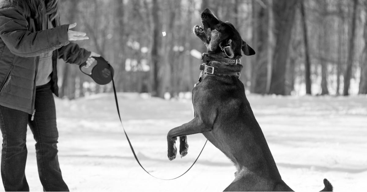 guinzaglio del cane