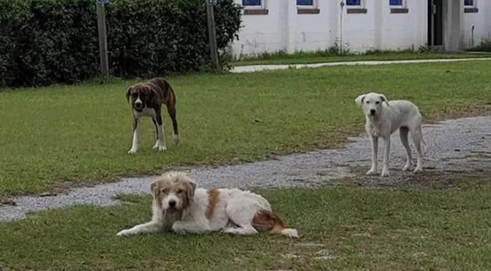 Tre-cani-che-osservano
