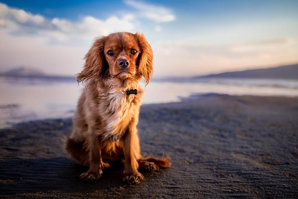 I cani sentono i peli sui loro occhi o non gli danno fastidio?
