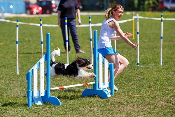 cane e conduttore a una gara