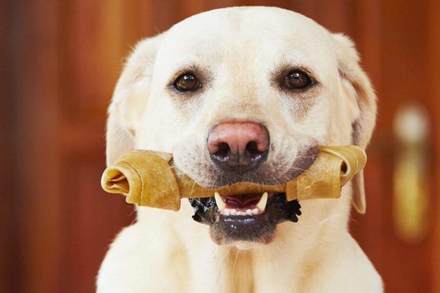 cane con osso in bocca