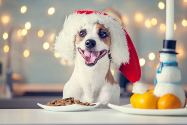 Alimenti natalizi da non dare al cane: quali sono e perché evitarli
