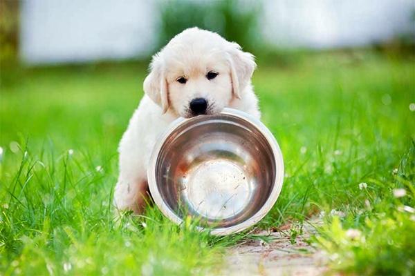 Alimenti naturali per cuccioli di cane: quali sono? Sono sicuri?