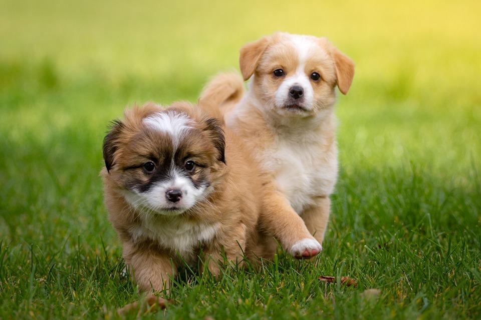 Il cane usa di più la zampa destra (o sinistra)? Ecco che significa