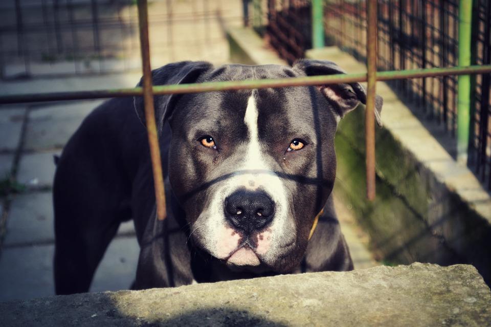 Cucciolo di cane aggressivo e diffidente: come comportarsi