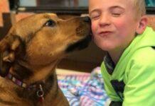 bambino-salva-molti-cani-ogni-mese-da-un-destino-crudele