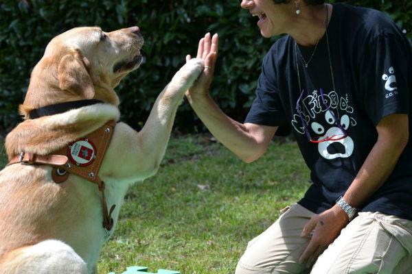 Benefici del cane guida: tutto quello che può fare Fido