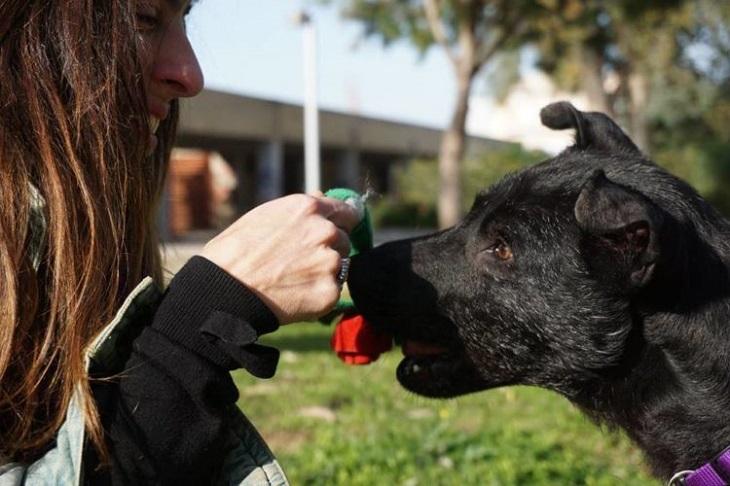 Il cane sembra non avere più speranze ma viene salvato da una donna