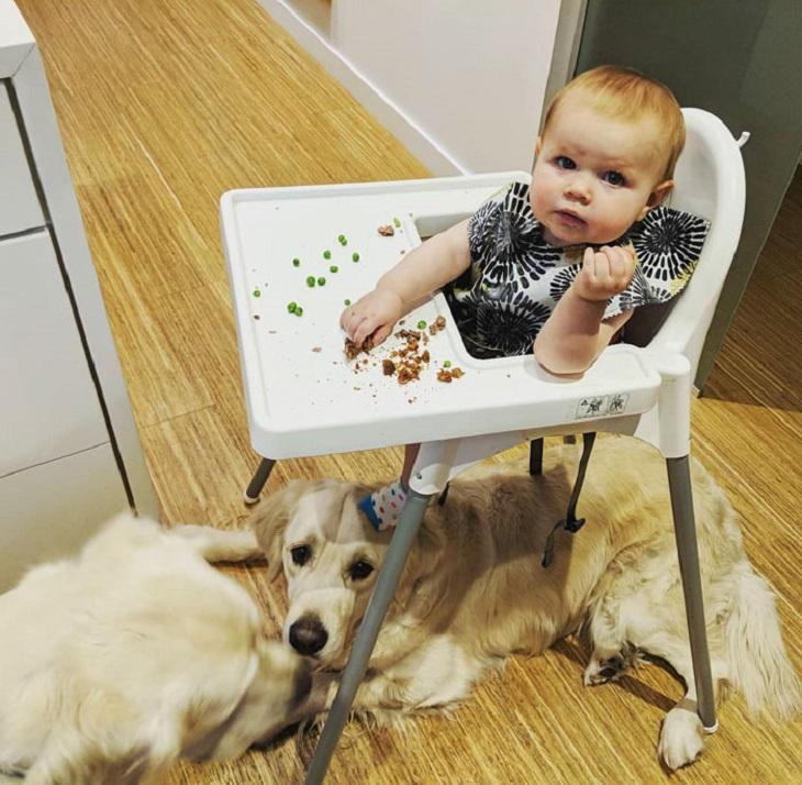 I due cani entrano nella stanza della piccola sorellina per cercare aiuto