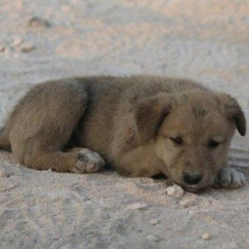 Il cucciolo viene salvato fra le macerie da un fotografo coraggioso