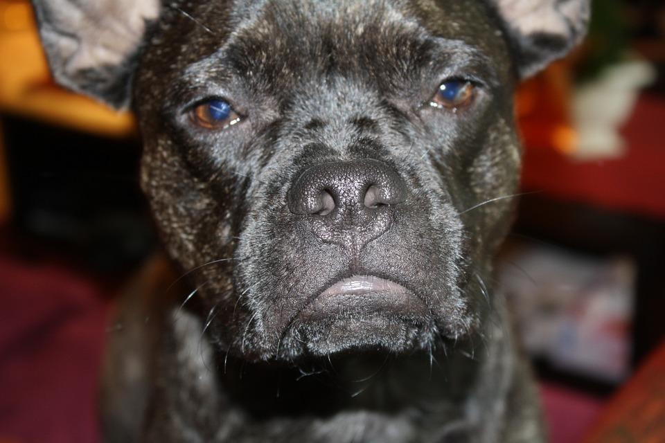Acalasia nei cani: cos'è, cosa la causa e come si cura