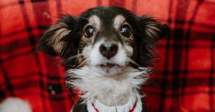 cane-abbandonato-sulla-gelida-neve-viene-salvato-da-due-volontari