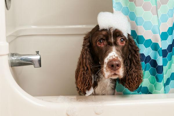 Cane che non vuole fare il bagno: come scendere a patti