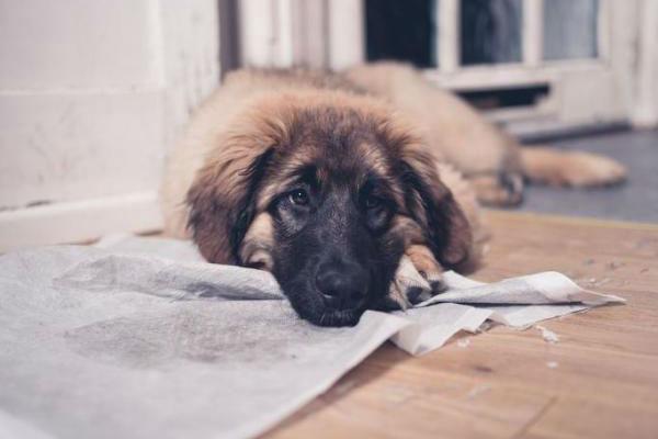cane che mangia l'immondizia