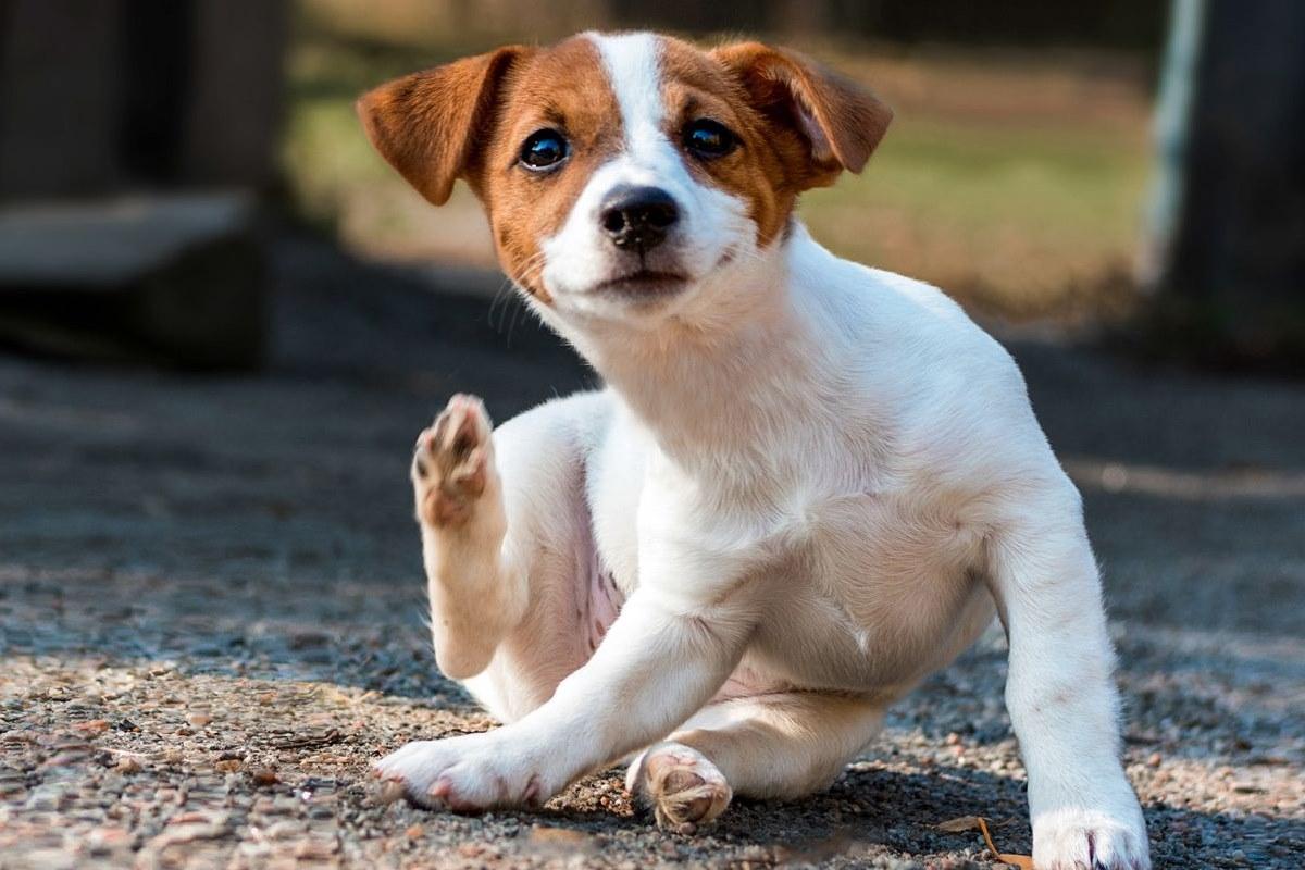 cucciolo che si gratta