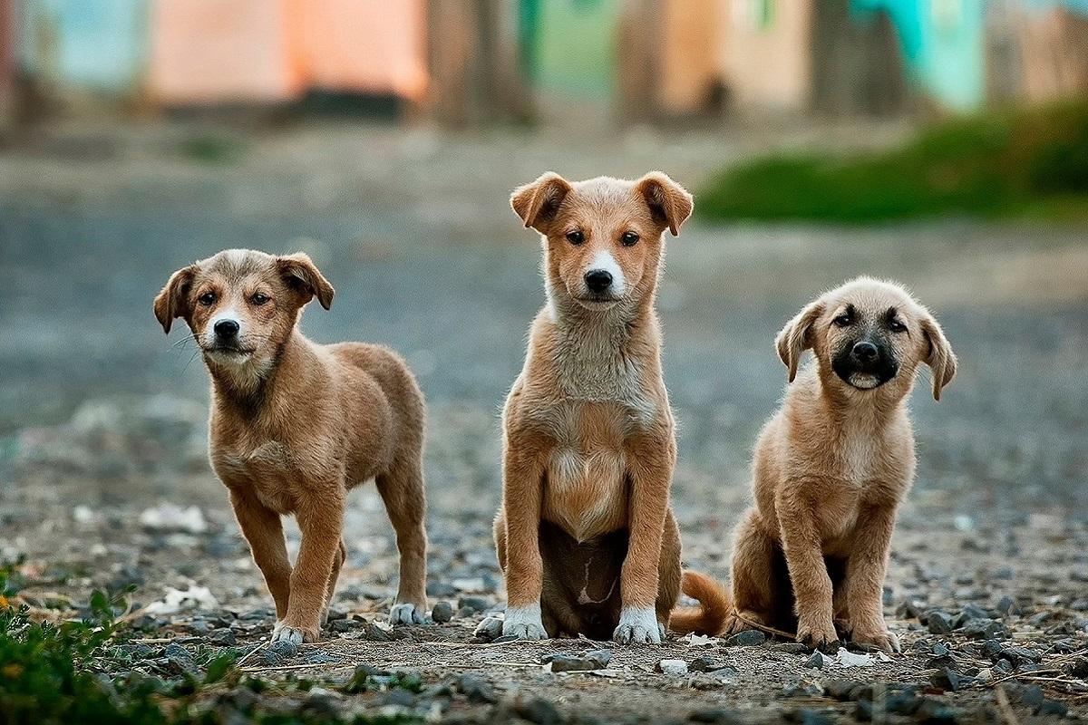cuccioli di cane fratelli