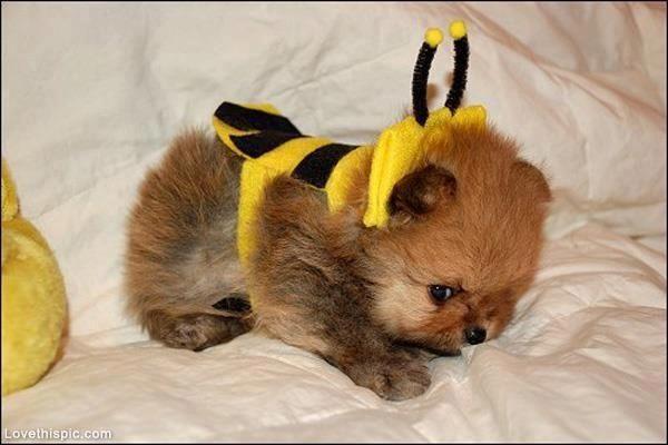 cane e api