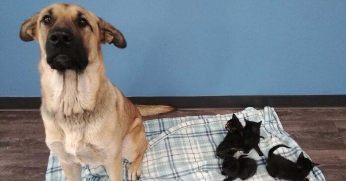 cane-randagio-salva-eroicamente-la-vita-di-5-gattini