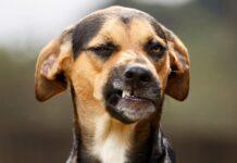cane disgustato
