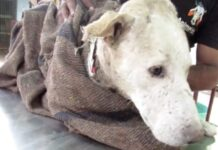 cane-si-nasconde-sotto-le-scale-di-una-casa-in-attesa-di-un-vero-miracolo
