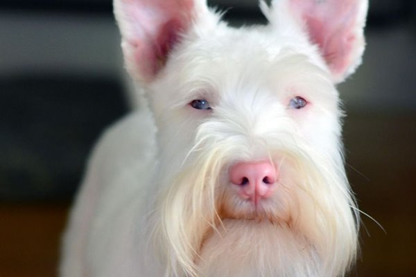 Cani albini e cani bianchi: quali sono le differenze?
