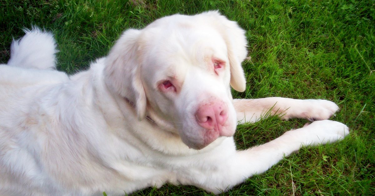 cane albino